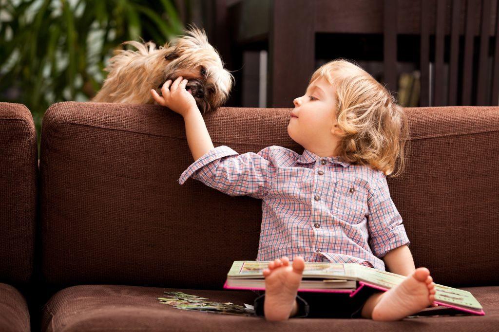 Havaneser-Hunde kommen in der Regel hervorragend mit Kindern zurecht