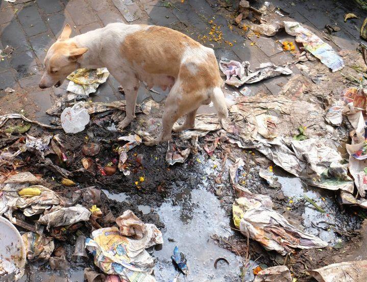 Hund im Messie-Müll
