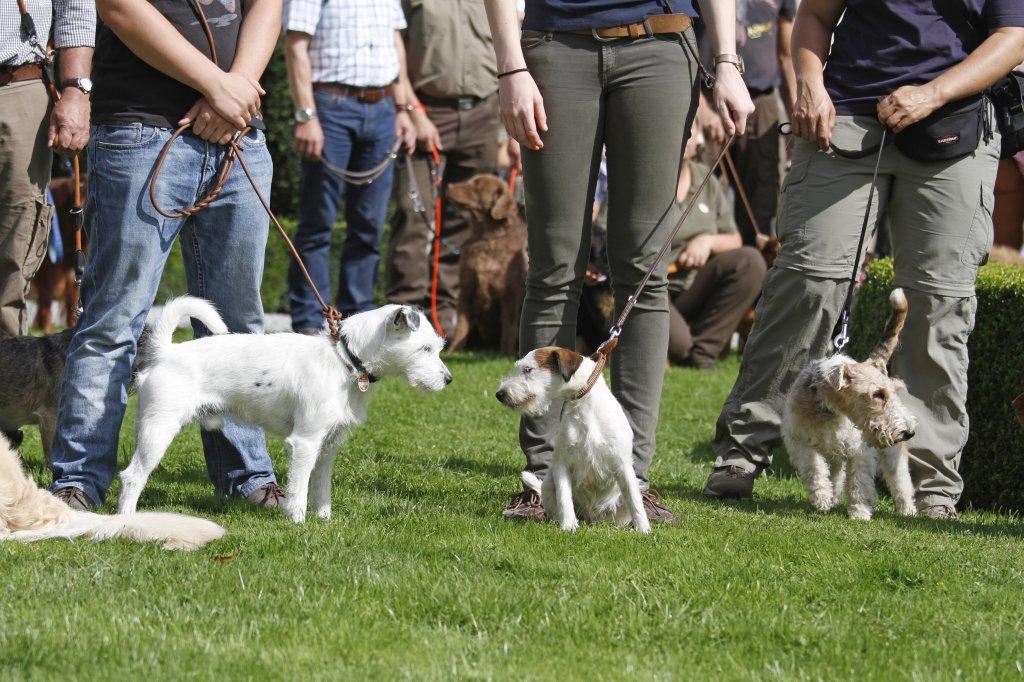 Gegen eine Hundeschule für die Havaneser-Erziehung spricht grundsätzlich nichts; holen Sie vorher aber am besten Empfehlungen ein