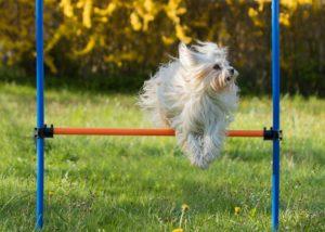 Die einzelnen Agility-Stationen sind auf die Größe der Hunde abgestimmt.