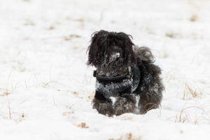 Auch wenn es noch soviel Spaß macht: nicht zu lange im Schnee bleiben.